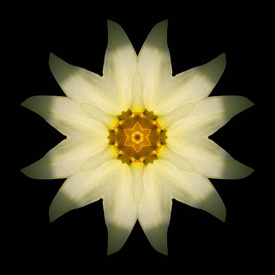 Print featuring the photograph Pale Yellow Daffodil Flower Mandala by David J Bookbinder