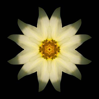 Pale Yellow Daffodil Flower Mandala Art Print