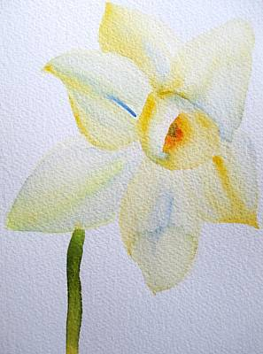 Pale Yellow Daffodil Art Print by Sacha Grossel