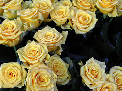 Photograph - Pale Yellow Roses by Robert Lozen