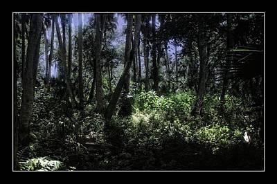 Florida Photograph - Paleo Hammock Preserve by Richard Hemingway