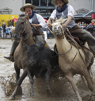 Working Cowboy Photograph - Paleteada With Criollo Horses by Venetia Featherstone-Witty