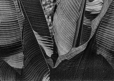 Photograph - Palm Abstract In Black And White by Nadalyn Larsen