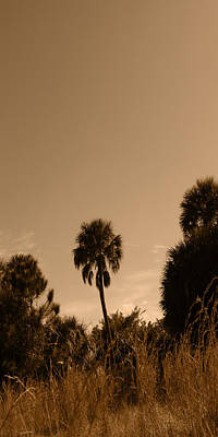 Photograph - Palm Alert by Steve Sperry