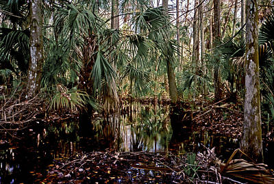 Photograph - Palm And Cypress. Three Lakes W.m.a. by Chris  Kusik