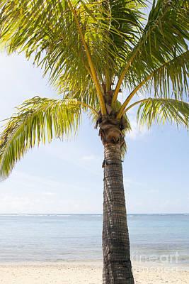 Photograph - Palm At Beach by Brandon Tabiolo