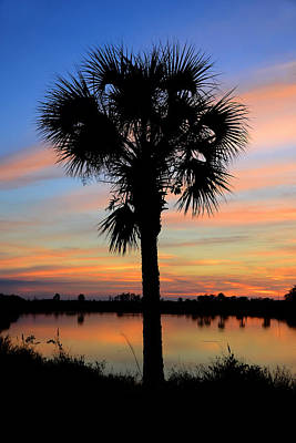 Photograph - Palm At Dusk by David Lee Thompson