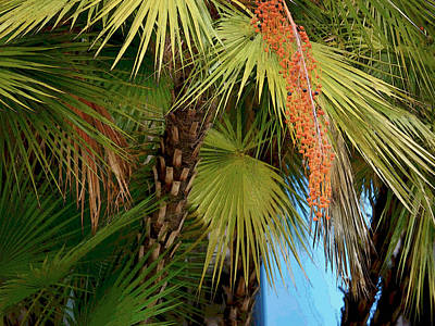 Photograph - Palm Ballet 2 by Herb Paynter