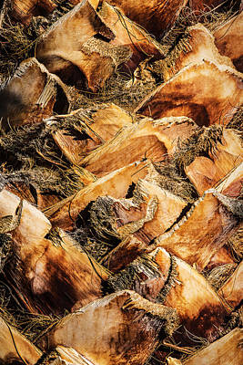 Photograph - Palm Bark by  Onyonet  Photo Studios