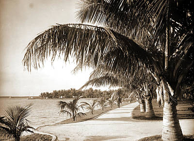 Walkway Drawing - Palm Beach, Jackson, William Henry, 1843-1942, Jackson by Litz Collection
