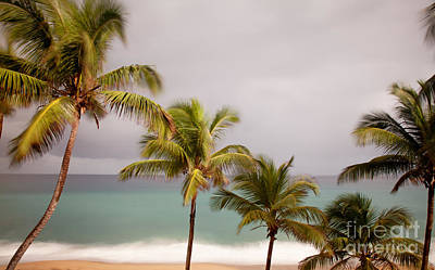 Photograph - Palm Beach by Jo Ann Tomaselli