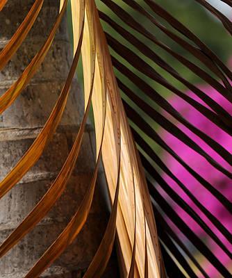 Photograph - Palm Beauty by Mark Sullivan