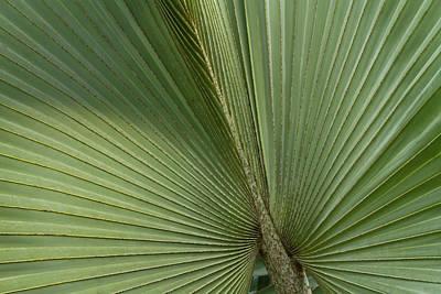 Palm, Belize Botanic Garden Art Print by William Sutton