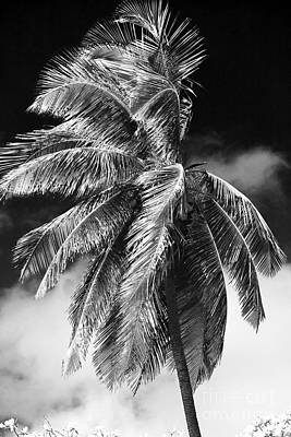 Photograph - Palm Blowing The Wind by John Rizzuto