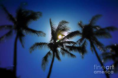 Photograph - Palm Breeze by Patrick Witz