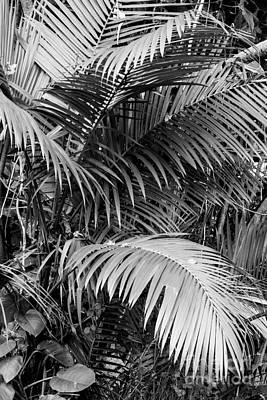 Photograph - Palm Bw by Suzanne Luft