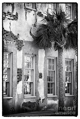 Photograph - Palm By The Building by John Rizzuto