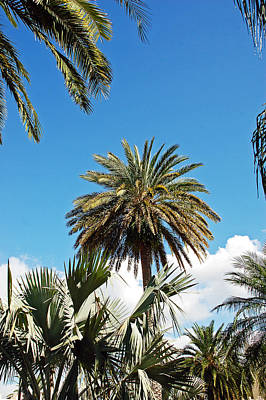 Tree Photograph - Palm City by Aimee L Maher Photography and Art Visit ALMGallerydotcom
