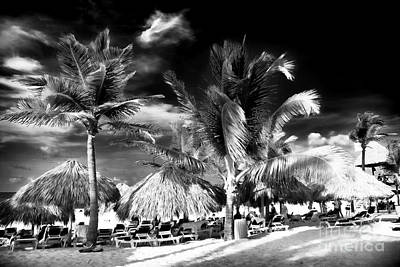 Photograph - Palm Days In Punta Cana by John Rizzuto