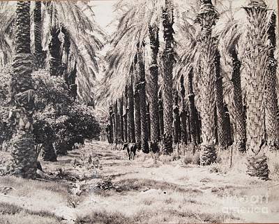 Photograph - Palm Desert by Nancy Kane Chapman