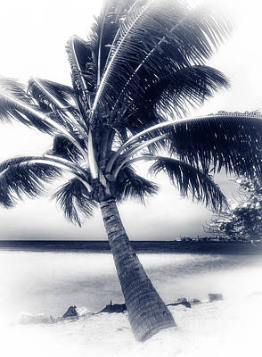 Photograph - Palm Dreams by John Rizzuto