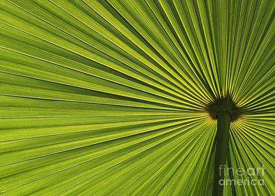 Photograph - Palm Fron Abstract by Sabrina L Ryan