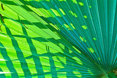 Photograph - Palm Frond 2 by Ben Graham