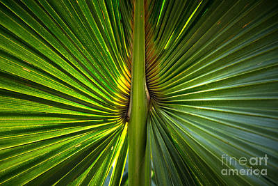 Photograph - Palm Frond Abstract  by Sally Simon