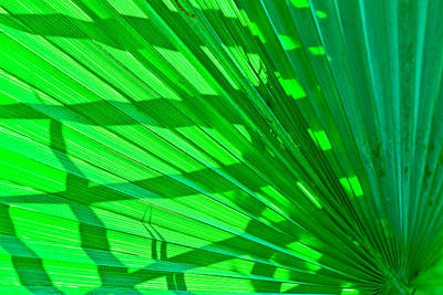 Photograph - Palm Frond by Ben Graham