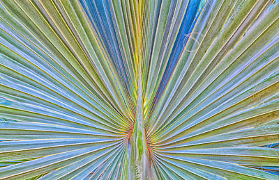 Digital Art - Palm Frond - Bismarckia Palm Madagascar by Ram Vasudev