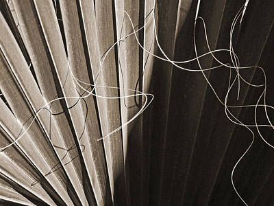 Photograph - Palm Frond Bw Sepia Abstract by Connie Fox