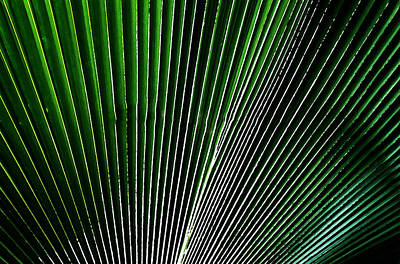 Digital Art - Palm Frond by Kara  Stewart