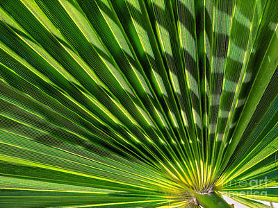 Photograph - Palm Frond by Robert Bales