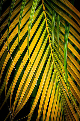 Photograph - Palm Fronds Patterns by Roger Mullenhour