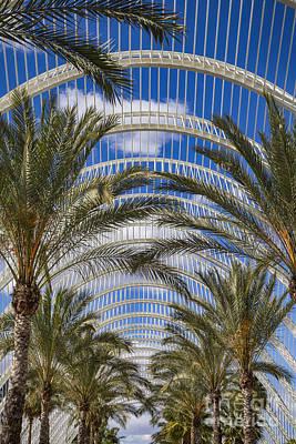 Photograph - Palm Garden by Fabian Roessler