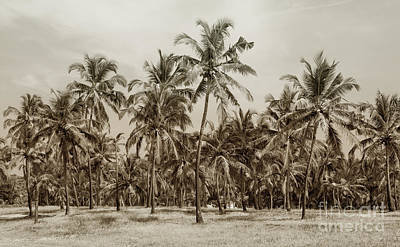 Palm Grove Art Print