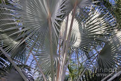 Photograph - Palm House 1 by Chris Scroggins