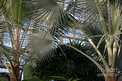 Photograph - Palm House 2 by Chris Scroggins