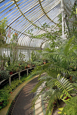 Conservatory Of Flowers Photograph - Palm House Belfast Ireland by Betsy Knapp