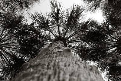 Photograph - Palm In Black And White by Jessica Brown