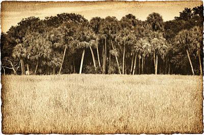 Animal Watercolors Juan Bosco - Palm Jungle by Skip Nall