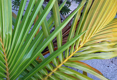 Photograph - Palm Leaf Abstract by Duane McCullough