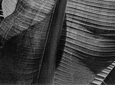 Photograph - Palm Leaf Abstract In Black And White by Nadalyn Larsen