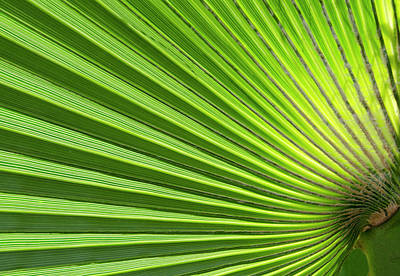 Cyprus Photograph - Palm Leaf Abstract by Nigel Downer