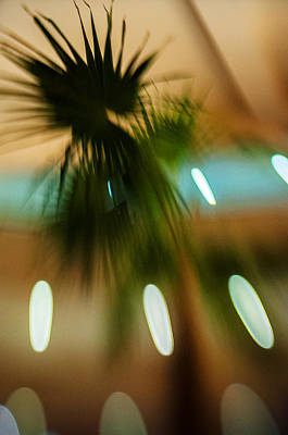 Photograph - Palm Leaf by Celso Bressan