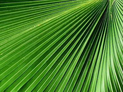 Abstract Photograph - Palm Leaf IIi by Zina Stromberg