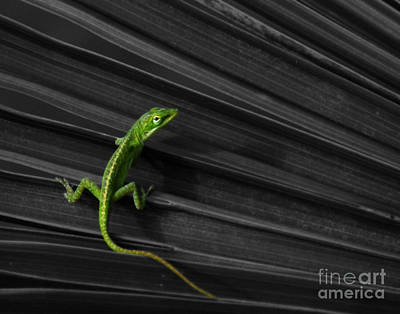 Photograph - Palm Leaf Lizard by Deborah Smith