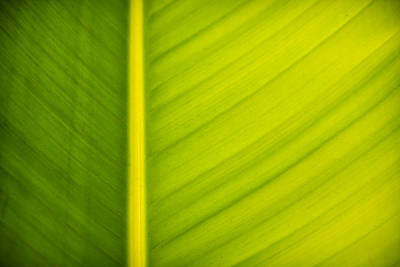 Palm Leaf Macro Abstract Art Print by Adam Romanowicz