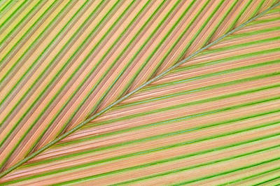 Palm Leaf, Sarapiqui, Costa Rica Art Print by Panoramic Images