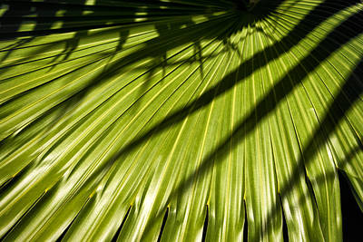 Photograph - Palm Leaves Color Dsc05268 by Greg Kluempers